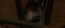 Preview image for The dog understands